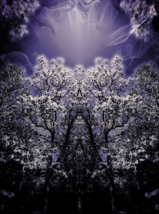 Abstract Purple Dream