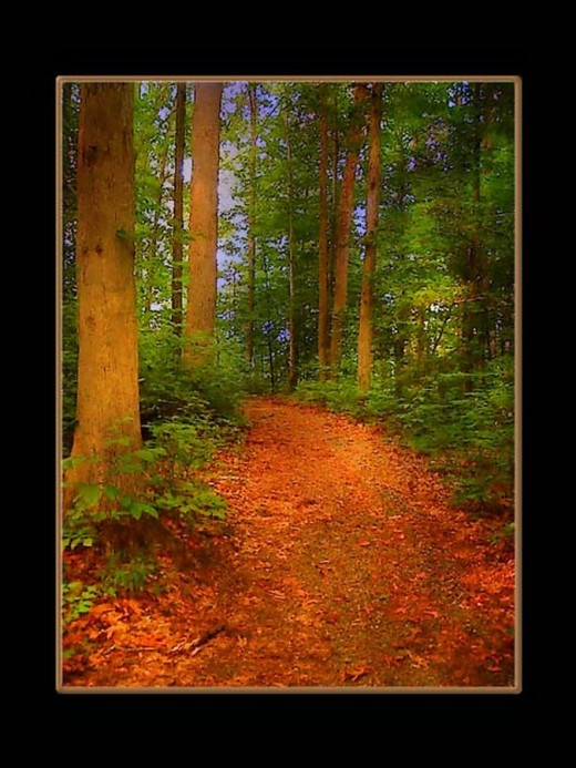 Surreal Path